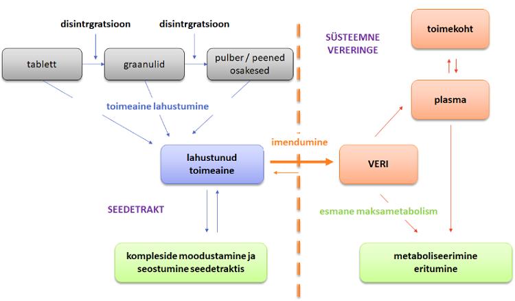 Joonis 1.  Ravimi manustamise järgsed protsessid organismis.