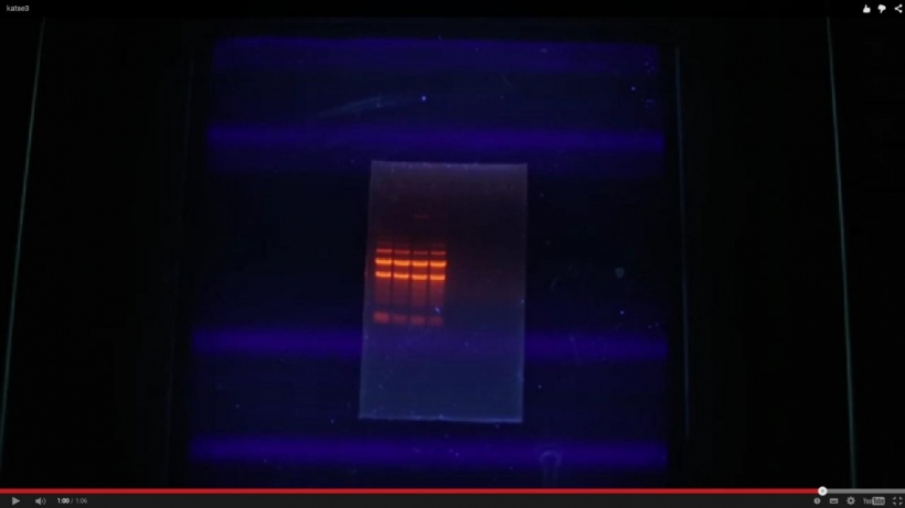bakterite_antibiootikumitundlikkuse_maaramine_katse_3.jpg