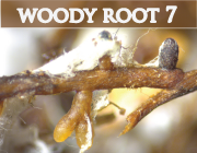 woodyroots_v2.png
